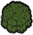 Forest Leaves.png